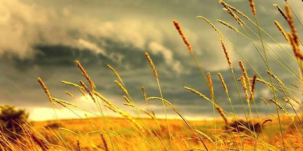 افتتاح وبسایت مجموعه تولیدی ادوات کشاورزی صادقی